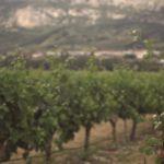 bodega otazu vineyard