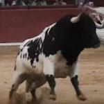 recortador-dodging-bull-in-pamplona