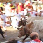 steer-speeding-along-bull-run-route