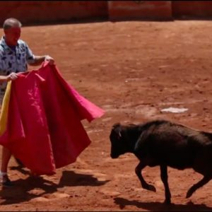 Torero Training & Bull Ranch Tour