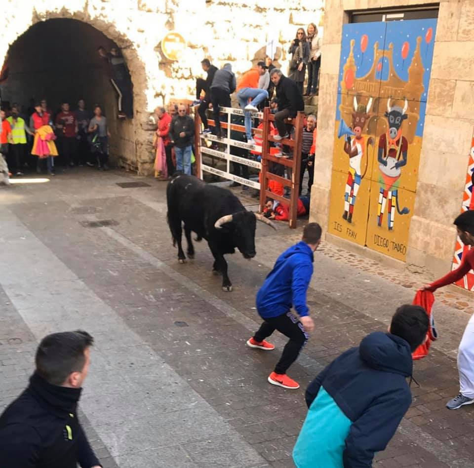 Ander running with the bulls